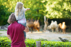 Young father and his little daughter watching camels in the zoo on warm and sunny summer day. Royalty Free Stock Photos