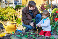 Young father and his little son planting seedlings in vegetable Stock Photos