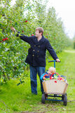Young father and little toddler boy picking apples Stock Images