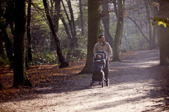 A young father pushing a stroller in the park Royalty Free Stock Photo