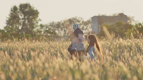 A young father with a small daughter on his shoulders and her mother in a field of wheat among the green spikelets in. The rays of the setting sun. Happy stock footage