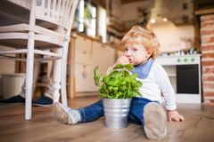Young father with a toddler boy cooking. Royalty Free Stock Photography