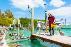 Young father and two little kid boys feeding fishes and big brown pelicans in port of Islamorada, Florida Keys. Man and stock photo