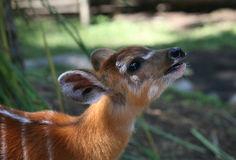 Young fawn Stock Photo