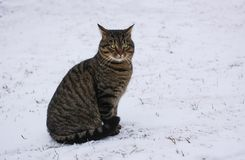 Young fearful cat on fresh snow outdoors at winter. Young fearful cat on snow outdoors at winter royalty free stock photography