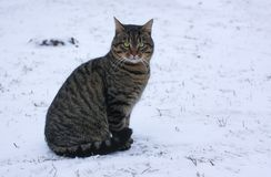 Young fearful cat on snow outdoors at winter. Young fearful cat on fresh snow outdoors at winter stock photo