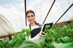 Young female agriculture engineer inspecting plants Stock Images