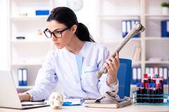 The young female archaeologist working in the lab. Young female archaeologist working in the lab royalty free stock images