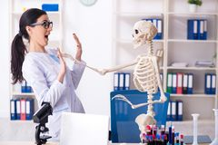 The young female archaeologist working in the lab. Young female archaeologist working in the lab royalty free stock image