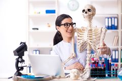 Young female archaeologist working in the lab. The young female archaeologist working in the lab stock photography