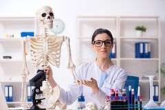 The young female archaeologist working in the lab. Young female archaeologist working in the lab royalty free stock photography
