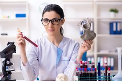 Young female archaeologist working in the lab. The young female archaeologist working in the lab royalty free stock photography