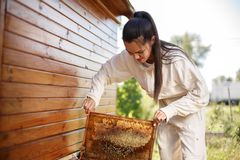 Young female beekeeper pulls out from the hive a wooden frame with honeycomb. Collect honey. Beekeeping concept.  stock photo
