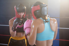 Young female boxers wearing protective sportswear Stock Photography
