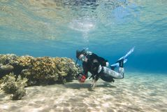 Young female diver in clear shallow water. Royalty Free Stock Images
