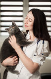 Young female doctor Veterinary with a three color cat on arms. m. Edical equipment on background. Veterinarian doctor holding of a cute beautiful cat Stock Photos
