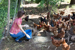 Young female farmer giving feeding Stock Image