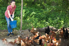 Young female farmer giving feeding Royalty Free Stock Photo