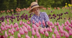 Female Farmer Examining Pink Tulip Flowers At Field. Young female farmer wearing straw hat while examining pink tulip flowers at field stock video footage