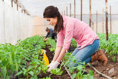 Young female garden worker planting crop Stock Images