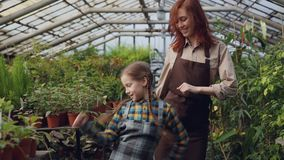 Young female gardener in apron and her cute daughter are dancing in greenhouse having fun. Happy family, gardening. Young female gardener in apron and her cute stock video footage