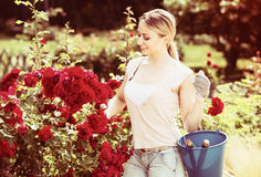 Young female gardener caring roses Stock Photo