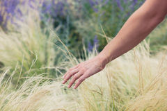 Young female hand touching grass outside Royalty Free Stock Photos