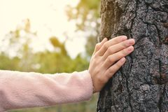 Young female hand touching a tree in forest Stock Images