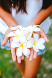 Young female hands offering frangipani, flumeria flowers.  Royalty Free Stock Photography