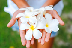 Young female hands offering frangipani, flumeria flowers Stock Photo