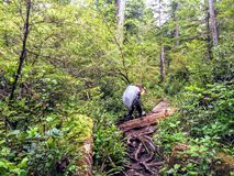 A young female hiker making her way through the forests of Vancouver island on the famous West Coast Trail hike stock photography