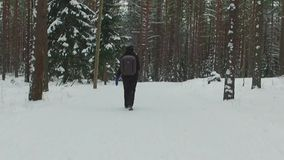 Young female hiking with a backpack in beautiful winter forest. Slow motion footage. Snowfall. Snowstorm. Nature landscape stock video footage