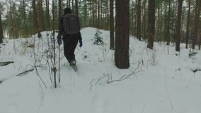 Young female hiking with a backpack in beautiful winter forest. Slow motion footage. Snowfall. Snowstorm. Nature landscape stock footage