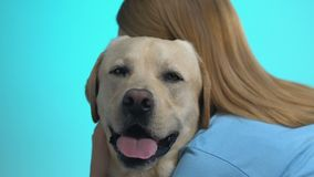 Young female hugging labrador looking at camera, pet love, animal care, closeup. Stock footage stock footage