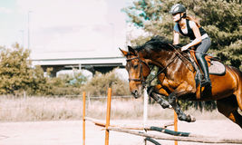 Young female jockey on horse leaping over hurdle Royalty Free Stock Photo