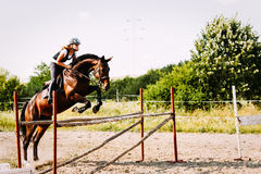 Young female jockey on horse leaping over hurdle Stock Photography