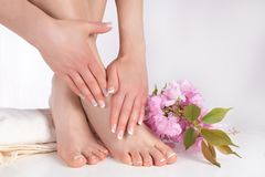 Young Female Legs With Bare Feet And Hands With French Manicure And Pedicure On White Towel In Spa Salon And Pink Flower Stock Photography
