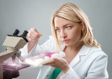 Young female microscopist in white coat selects a tissue sample Royalty Free Stock Photo