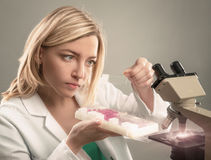 Young female microscopist in white coat selects a tissue sample Stock Photo