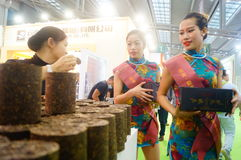 Young female models promote tea products Stock Images