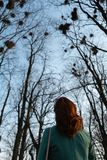 Young female ornithologist observing rooks nesting high up in trees in Spring - Bauska, Latvia, 2019 stock photography