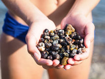 Young female person with hands full of salt water snails Royalty Free Stock Photography
