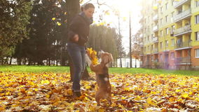 Young female playing with beagle puppy dog in autumnal park stock video
