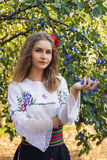Young female posing in traditional Serbian. Portrait of beautiful young female posing in traditional Serbian clothing near a plum tree and holding plums in hand stock photos