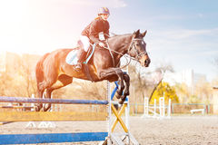 Young female rider on bay horse jump over hurdle Stock Image