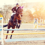 Young female rider on bay horse jump over hurdle. Young female rider on bay horse jumping over hurdle on equestrian sport competition Royalty Free Stock Photography