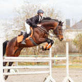 Young female rider on bay horse jump over hurdle Stock Photos