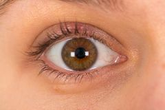 Young female`s brown eye royalty free stock photo