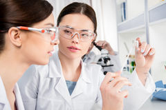Young female scientists stock photo