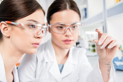 Young female scientists royalty free stock photo